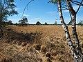 Niedersachsen, Region Hannover, Bissendorfer Moor, NSG HA 00046, 2021 02.jpg