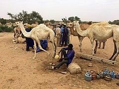 Niger, N'Gonga (15), camel traders at livestock market.jpg