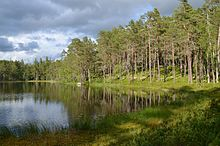 Norra Kvill National Park, Sweden (by Pudelek) 02.jpg
