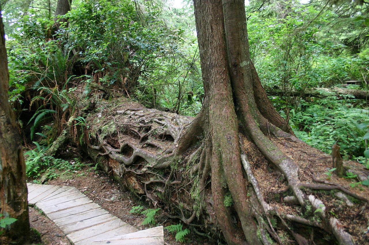 nursery log