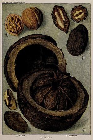 Nuts (1), illustration