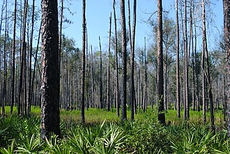 Columbia County, Florida - Osceola National Forest