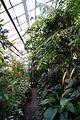 Ogród Botaniczny UJ w Krakowie 013.JPG