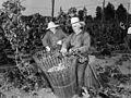 Older farm laborers picking hops (9173682603).jpg