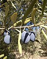 Olives noires.jpg