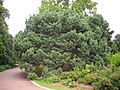 Orléans - parc floral (69).jpg