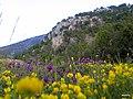 Orta kayadan kozağaç taşı - panoramio (2).jpg