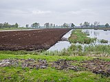 Ostercappeln - Venne - Venner Moor 06.jpg