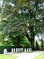 Overview2 steenwijkerwold Kallenkote cemetery.jpg