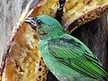 Pássaro - panoramio (4).jpg