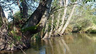 Wieprz river in Poland