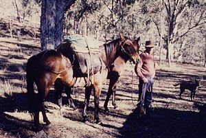 Packhorse - A stockman with a packhorse