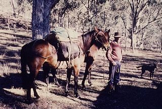 Packhorse horse used to carry goods
