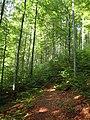 Padis forest 01.jpg
