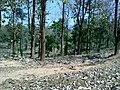 Parambikulam Tiger reserve - panoramio (1).jpg