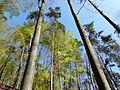 Parc Naturel des Vosges du Nord.jpg