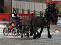 Paris-Cup-Traction Poitevins01 SDC2014.JPG