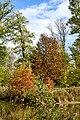 Parkansichten Queen-Auguste-Victoria-Park (Umkirch) jm54304 ji.jpg