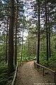 Parque Biológico de Vinhais - Portugal (34594896103).jpg
