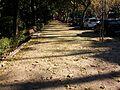 Passeig de l'avinguda de Blasco Ibáñez, València.jpg