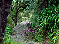 Pathway @ St Peter's Church.jpg