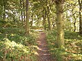 Pathway through blue bell wood - geograph.org.uk - 1046764.jpg