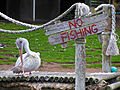 Pelican at Seaview Wildlife Encounter.jpg