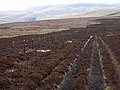 Pennine Way at Mozie Law - geograph.org.uk - 1221709.jpg