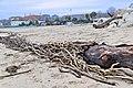 Pescara Lungo-Mare 2014-1 by-RaBoe 16.jpg