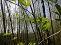 Petit bosquet au printemps à Grez-Doiceau 001.jpg