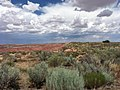Petrified Forest National Park Vista.jpg