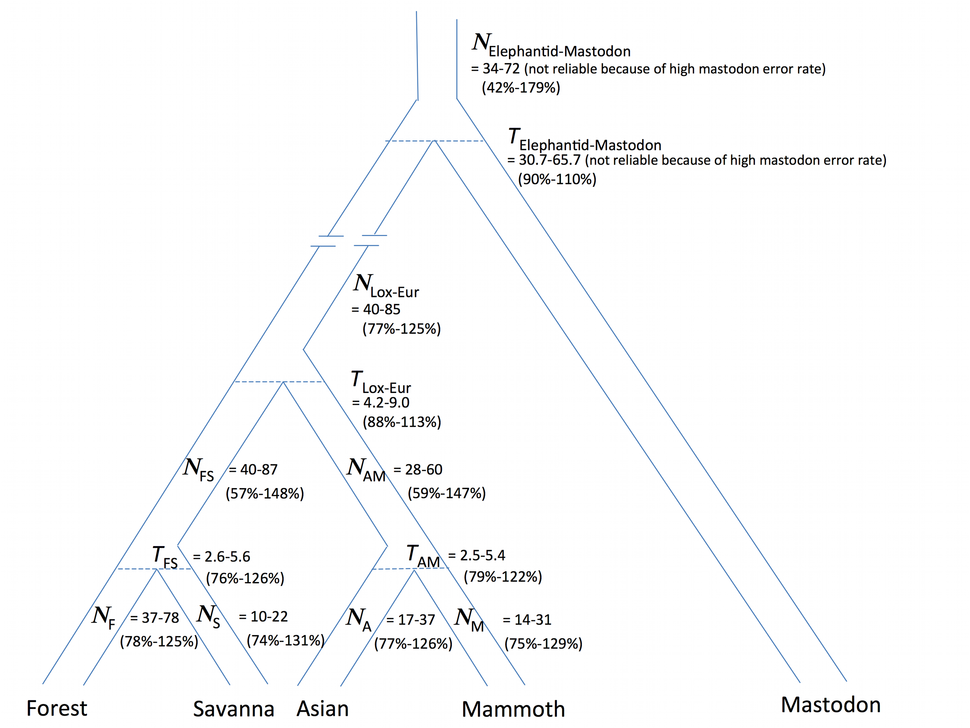 Phylogenetic Tree of Elephants and Mammoths 2010