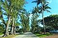 Pine Tree Drive Miami Beach - John S Collins 02.jpg