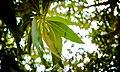 Plant 123.jpg