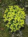 Plants growing on the harsh rocks of Soderskar lighthouse island2.jpg