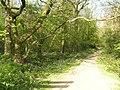 Ploughman Wood - geograph.org.uk - 406728.jpg
