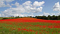 Poppies again 2 (5781783806).jpg