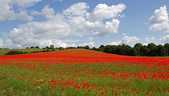 Worcestershire Wildlife Trust - Image: Poppies again 2 (5781783806)