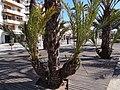 Port d'Alcúdia, Illes Balears, Spain - panoramio (13).jpg