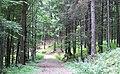 Pozor odbočka^ - change of direction - panoramio.jpg