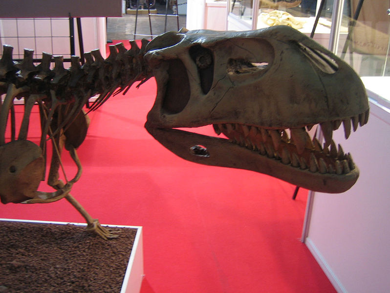 http://upload.wikimedia.org/wikipedia/commons/thumb/b/b8/Prestosuchus_chiniquensis_skull_Expominer_07.jpg/798px-Prestosuchus_chiniquensis_skull_Expominer_07.jpg