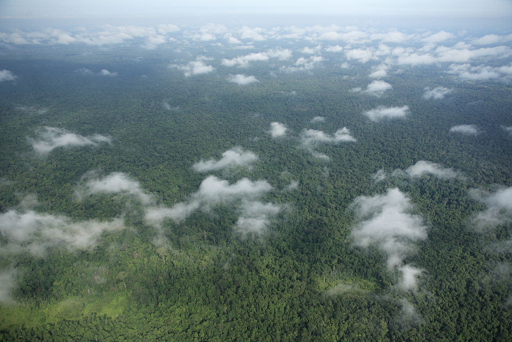 Prey Vor Cambodia  city photos : Industrial concessions causing massive deforestation in Cambodia