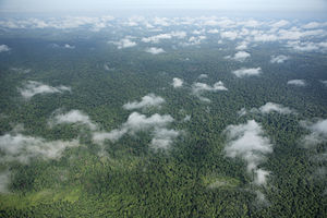 Prey Lang Forest Aerial