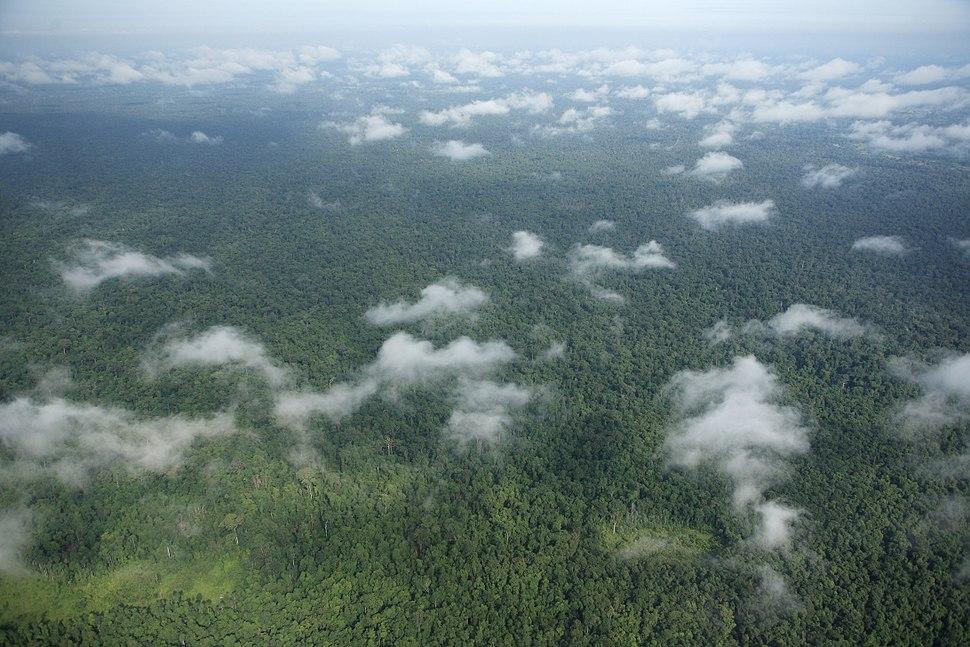 Prey Lang Forest Aerial