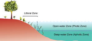 Aquatic ecosystem - The three primary zones of a lake.