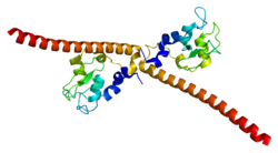 Protein BIRC5 PDB 1e31.png