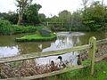 Pub Ducks, Fountain Inn - geograph.org.uk - 268326.jpg