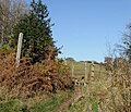 Public Footpath to Colton Hills, Staffordshire - geograph.org.uk - 617072.jpg