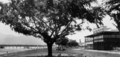 Queensland State Archives 114 The Esplanade Cairns c 1926.png