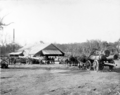 Queensland State Archives 2659 State Sawmill Pikedale January 1920.png